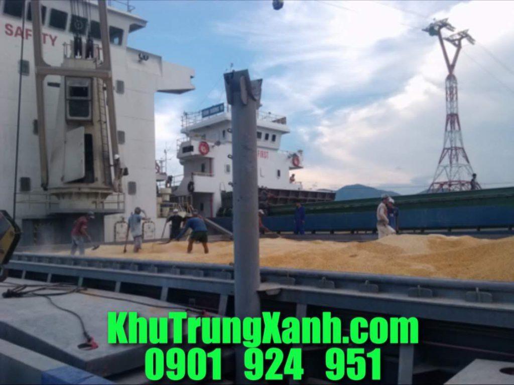 Khử trùng tàu cảng Phú Mỹ