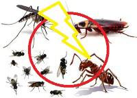 Dịch vụ côn trùng