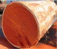 Nguyên liệu gỗ gõ đỏ