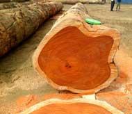 Nguyên liệu gỗ đỏ