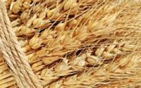 Nhập khẩu lúa mì
