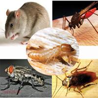 Dịch vụ diệt côn trùng gây hại