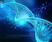 Giám định ADN