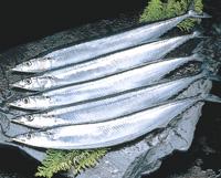 Cá thu đao
