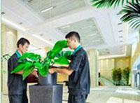 Bán và cho thuê cây nội thất