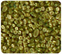 Hạt nhựa HDPE LDPE