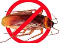 Dịch vụ diệt ruồi muỗi kiến gián