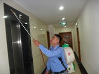 Dịch vụ diệt côn trùng văn phòng
