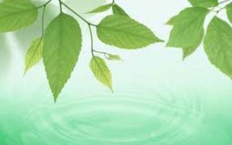 Lập báo cáo giám sát môi trường