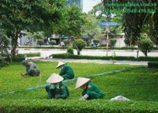 Chăm sóc bãi cỏ khu vườn