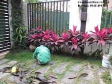 Chăm sóc sân vườn biệt thự