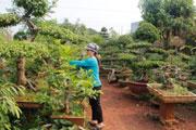 Dịch vụ cây xanh