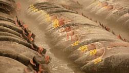 Đá khô cấp đông và bảo quản hải sản