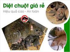 Phòng và diệt chuột