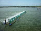 Hỗn hợp enzymes xử lí môi trường nước ao nuôi