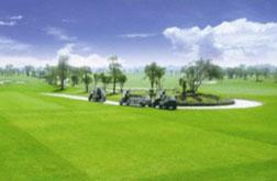 Hình ảnh sân golf