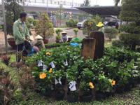 Dịch vụ thiết kế và thi công sân vườn