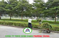 Dịch vụ chăm sóc và bảo dưỡng cây xanh