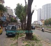 Dịch vụ chặt hạ cây xanh