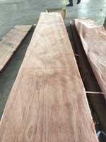 Ván lạng gỗ Oak