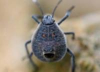 Dịch vụ diệt côn trùng độc hại