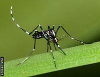 Diệt muỗi cho hộ gia đình
