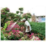 Dịch vụ chăm sóc cây tại nhà