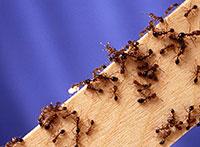 Dịch vụ diệt kiến