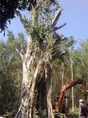 Dịch vụ thiết kế trồng cây