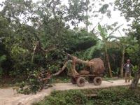 Dịch vụ di dời cây xanh