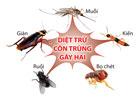 Dịch vụ diệt côn trùng khác