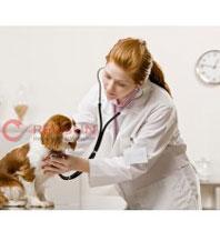 Đồng phục bác sỹ thú y
