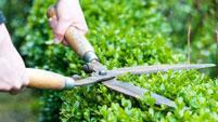 Trồng chăm sóc cây xanh