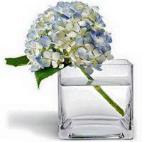 Bình thủy tinh cắm hoa