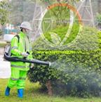 Chăm sóc cây xanh