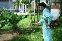 Dịch vụ cây xanh cây cảnh