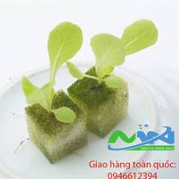 Mút trồng cây thủy canh