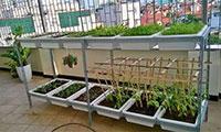 Kệ trồng rau sạch