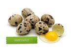 Trứng cút tươi