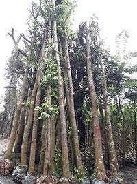 Cây xanh tư gia