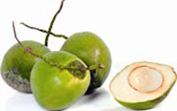 Cây dừa giống