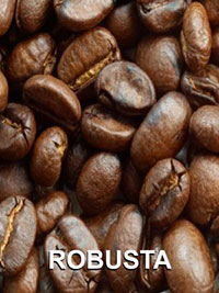 Hạt cà phê Robusta
