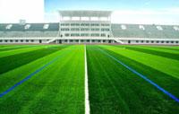 cỏ nhân tạo sân bóng 11