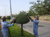 Dịch vụ cắt tỉa cây