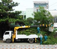 Dịch vụ trồng cây