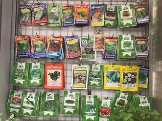 Cung cấp cây rau giống