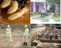 Dịch vụ phòng trừ mối công trình