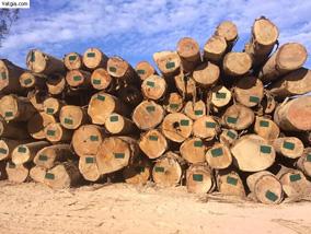Gỗ dầu tròn Lào
