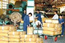 Mủ cao su xuất khẩu