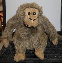 Khỉ nhồi bông